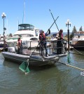 A University of Nevada, Reno researcher, center, scoops invasive fish from the Lake Tahoe (Credit: Mike Wolterbeek)