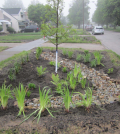The rain gardens are filled with sandy biosoil and planted with native vegetation.