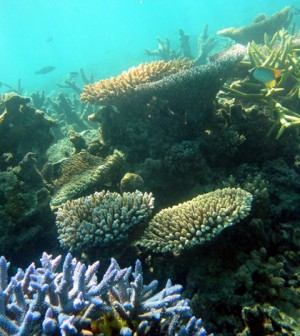 Coral reef (Credit: Terry Hughes, Wikimedia Commons)