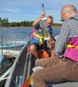 A field mesocosm experiment where DOM effects on coastal production were studied. (Credit: Kristina Viklund, Umeå Marine Sciences Centre)