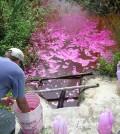 Crews apply Rhodamine dye to Florida treatment to study flow problems (Credit: Wetland Solutions, Inc)