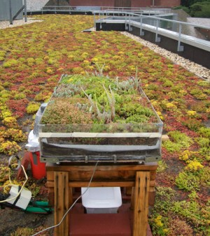 A weighing lysimeter tracks the reduction in mass before and after rainy or dry periods, giving a precise measure of evapotranspiration. (Credit: Franco Mantalto)