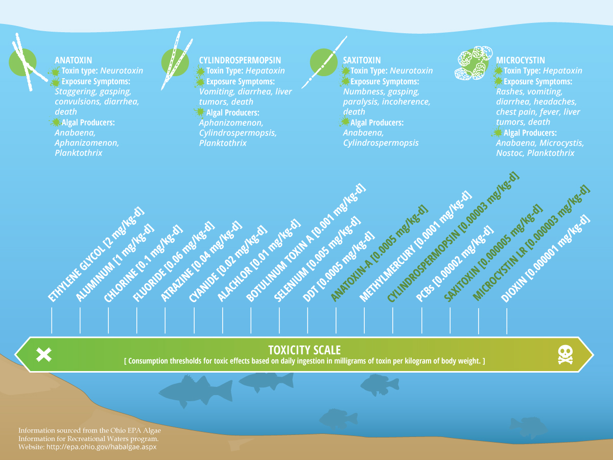 Toxicity of algal toxins compared with other substances. Click to expand. (Credit: Nate Christopher)