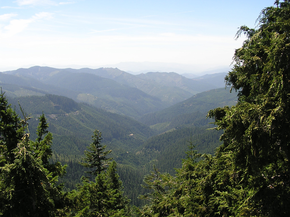 Looking down over the Calapooia's forested headwaters with the forest management visible (Credit: Daniel Evans)