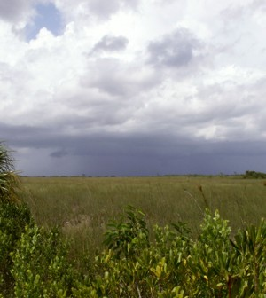 Everglades National Park along the main road to Flamingo (Credit: Moni3, via Wikimedia Commons)