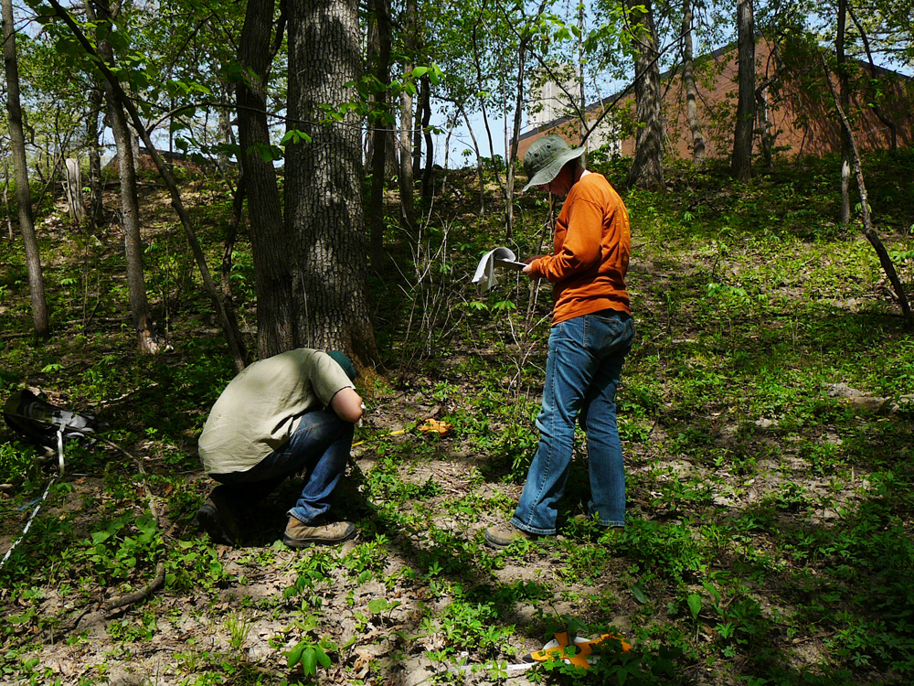 Gerken Golay and field assistant (Rob Manatt) survey herbaceous vegetation in an urban forest (Credit: Zak Keninger)