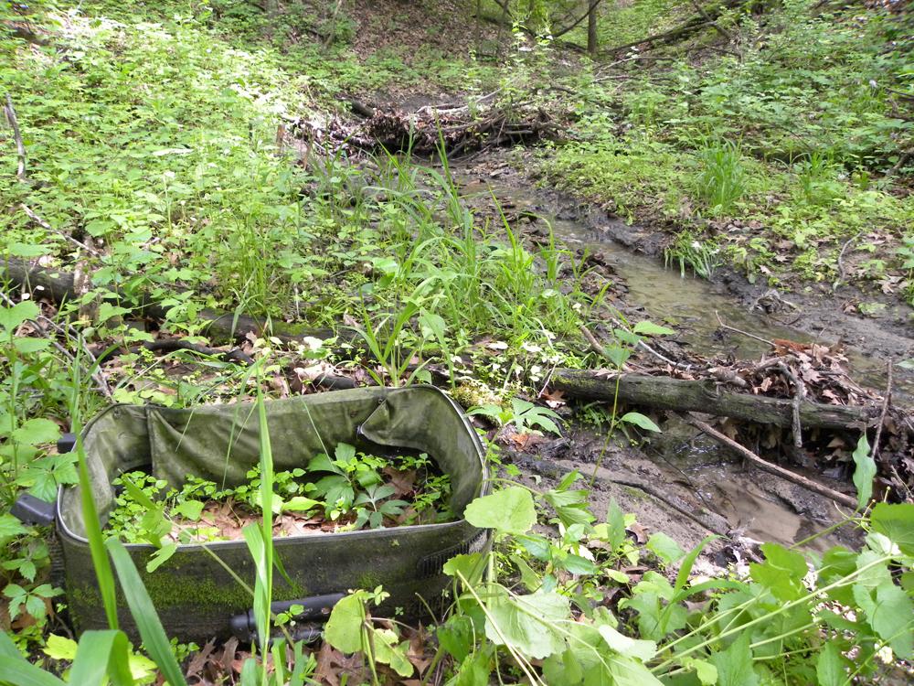 Debris and invasive plants near an urban forested stream (Credit: Zak Keninger)
