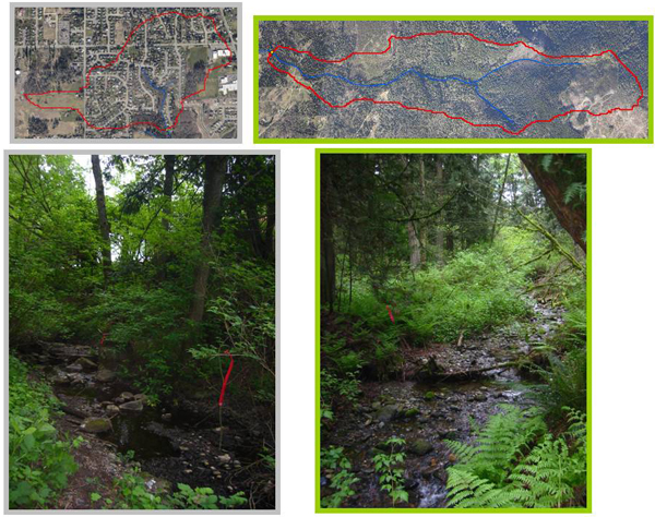 The researchers investigated the biotic difference between buffered streams with similar water quality and habitat but different watershed uses. The stream on the left is in an urban watershed, and the one on the right in a forested watershed. (Composite image: Alli Neils)