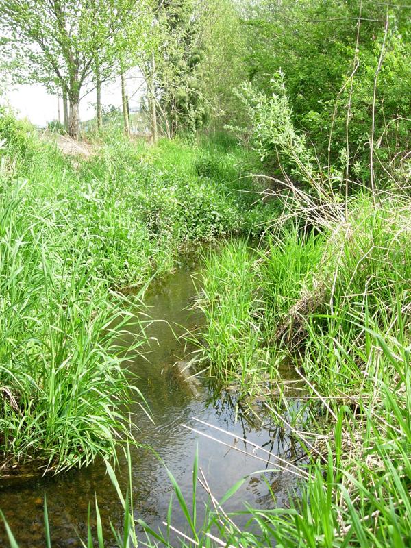 "An unbuffered reach in a ""grassland"" watershed."