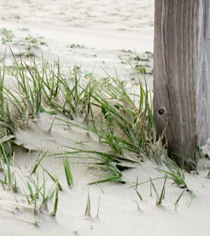 Beach sand on Isle of Palms (Credit: Gary Dicer, via Flickr)
