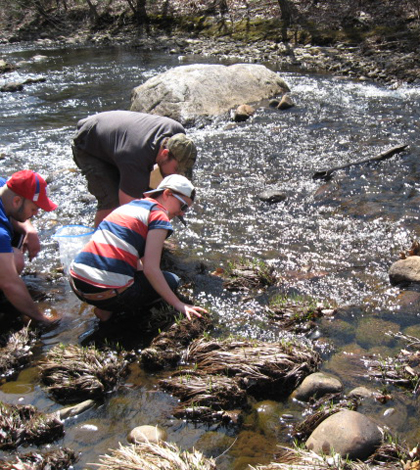 Students investigate sediment in the Little River near the Westfield campus (Credit: Tarin Weiss)
