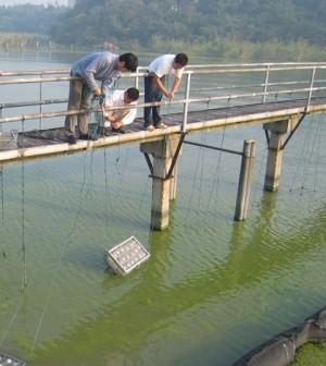 Sampling algae in China's Lake Taihu (Credit: UNC Institute of Marine Sciences)