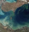 Algal blooms in Lake Erie's Western Basin in 2011 (Credit: NASA, via Wikimedia Commons)
