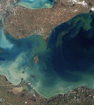 Algal blooms in Lake Erie's Western Basin in 2011 (Credit: NASA, via Wikimedia Commons)