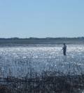 A Nebraska Rainwater Basin wetland (Credit: John Riens/U.S. Fish and Wildlife Service)