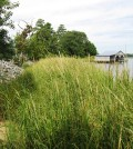 The restored shoreline near the Indian River Power Plant (Credit: Cardno ENTRIX)