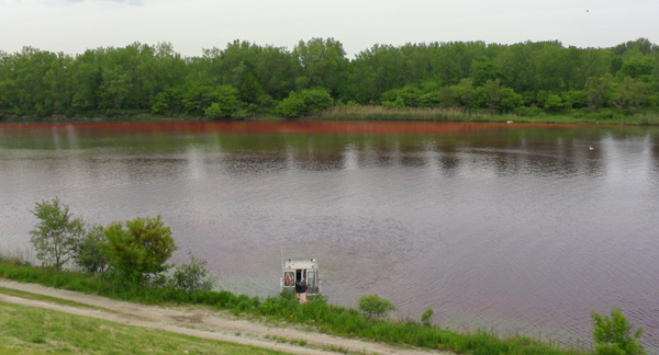 A dye plume visible in the Little Calumet River, the site of a second Rotenone application in 2010 (Credit: Ryan Jackson)