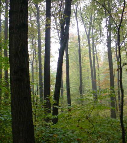 Ginn Woods is among the largest stands of old growth forest in Indiana (Credit: John Taylor)
