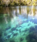 The crystal-clear water of the Silver River (Credit: John Hare)