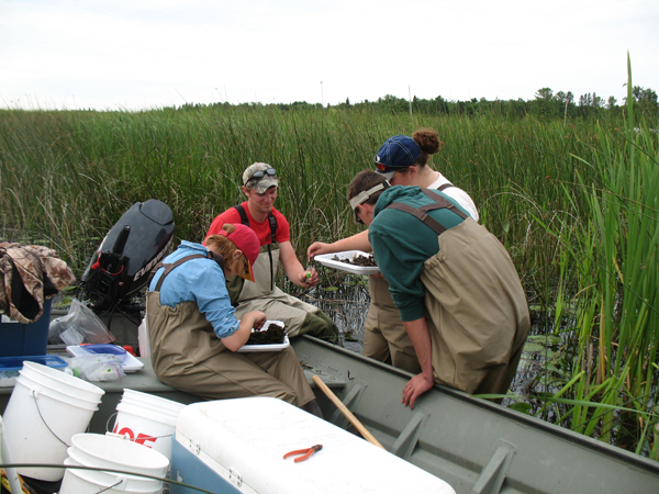 The monitoring program includes sampling for macroinvertebrates, amphibians, birds, vegetation and fish  (Credit: Matthew Cooper)