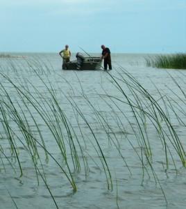 A sampling crew progresses along a Great Lakes coastal wetland (Credit: Matthew Cooper)
