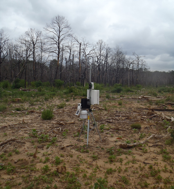 Portable weather station in a clearcut area of a burned region (Credit: Donald Brown)