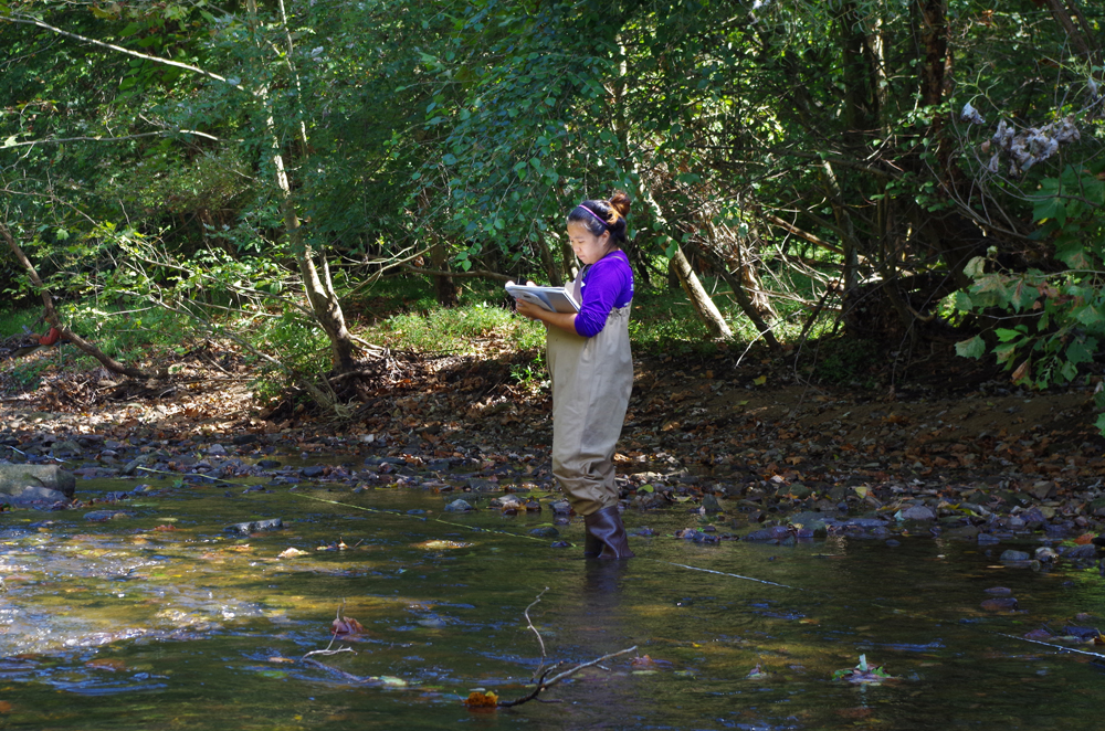 Academy research technician Amanda Chan documents the vegetation and physical characteristics of the stream and bank for the Delaware Watershed Conservation Program, sponsored by the William Penn Foundation. (Credit: ANSP)