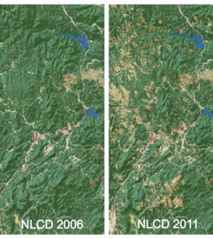 Canopy loss from a mountain pine beetle outbreak in the Black Hills, S.D. as captured by the 2011 National Land Cover Database (Crdit: USGS)