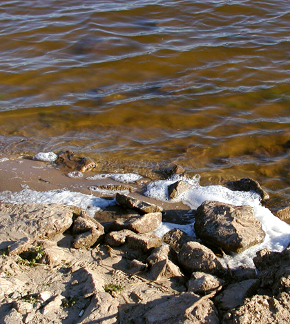 A golden algae bloom on Lake Texoma induced a fish kill (Credit: Oklahoma Department of Wildlife Conservation)