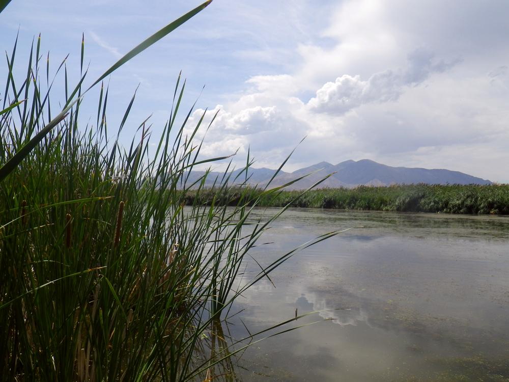 A Great Salt Lake wetland (Credit: Rebekah Downard)