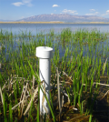 A monitoring well in a Great Salt Lake wetland (Credit: Rebekah Downard)