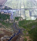 An aerial view of the North River Farms wetland restoration (Credit: NC State University Department of Biological and Agricultural Engineering)