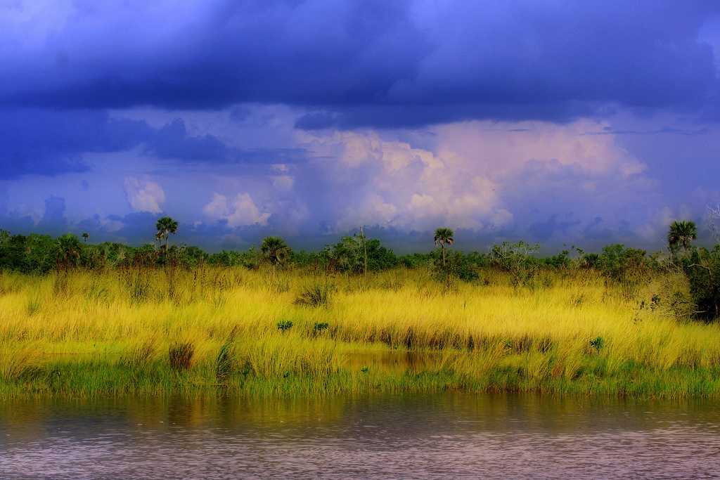 An Everglades marsh (Credit: Craig ONeal, via Flickr)