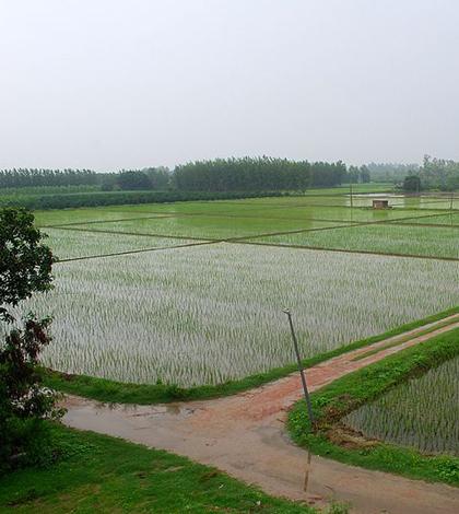 Agricultural fields of Punjab in the 2011 monsoon season (Credit: Sanyam Bahga, via Wikimedia Commons)