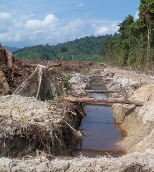 Land being clearing and drained for oil palm plantation development in West Kalimantan, Indonesian Borneo (Credit: Kimberly Carlson)