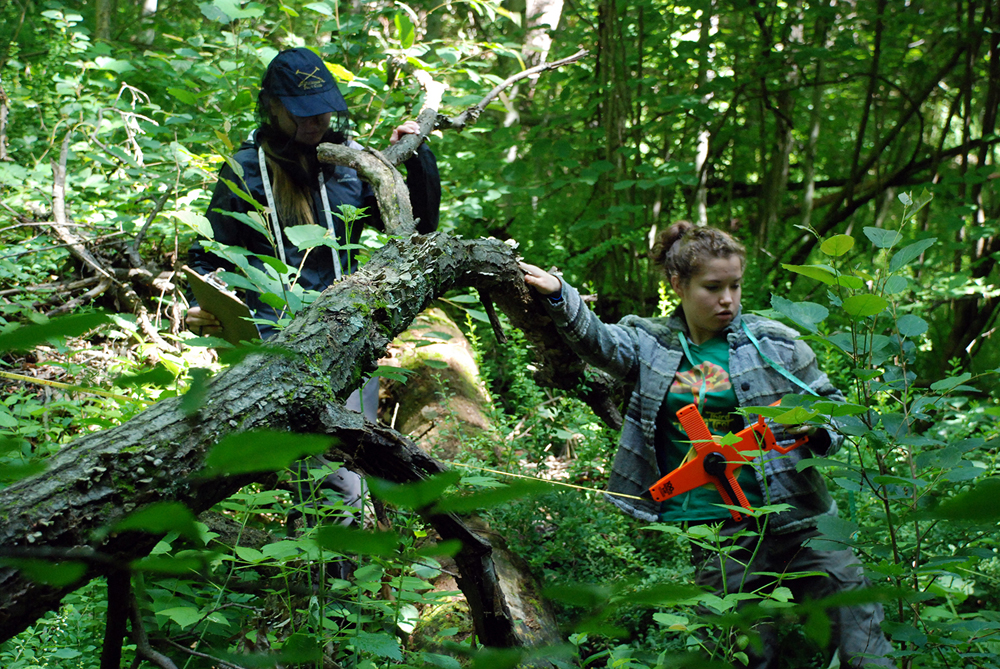 Students measured, mapped and tagged 45,000 trees over two months. (Credit: Dale Austin)