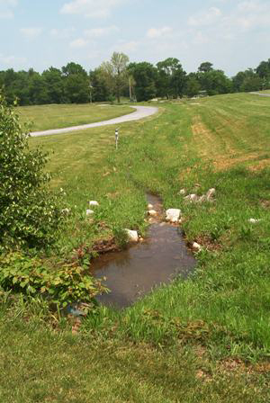An example of an open stream segment monitored in the study (Credit: Jeffrey Simmons)