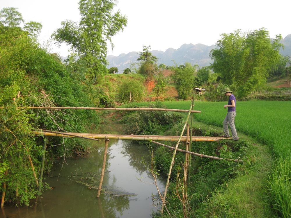 Sampling from  bamboo bridge (Credit: Johanna Slaets)