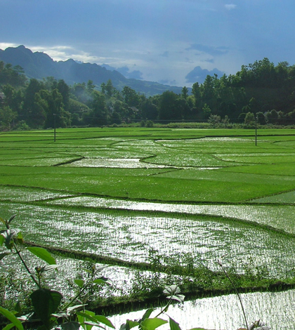 One of the study sites: a rice paddy after rainfall (Credit: Johanna Slaets)