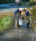 Peter Moyle and Cameron Reyes collecting fish on the McCloud River in the Sierra Nevada (Credit: UC Davis Watershed Sciences Center)