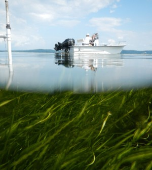 On the water over the seagrass of the Susquehanna Flats (Credit: Cassie Gurbisz)
