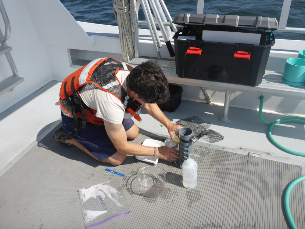 Adam Wickline transferring a zooplankton sample into a jar for preservation. The sample will later be analyzed with our ZooScan system. (Credit: Corie Charpentier)
