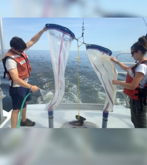 Adam Wickline and Corie Charpentier rinsing down the zooplankton sample after the plankton net has been recovered (Credit: Heather Cronin)