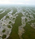 Aerial view of the Florida Everglades sloughs. (Credit: USGS)