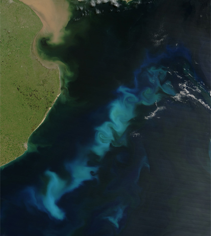 Phytoplankton bloom off the coast of Argentina. (Credit: NASA)