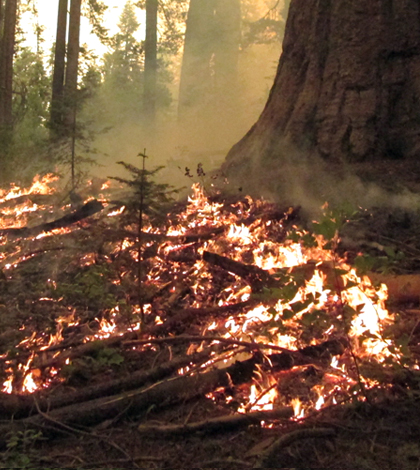 The Rim Fire burned 78,895 acres of park land. (Courtesy Yosemite National Park)