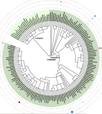 Phylogenetic profile and diversity of plants and algae. (Credit: Hajibabaei et al)