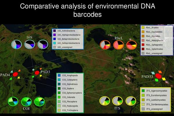 Comparitive analysis of environmental DNA barcodes. (Credit: Ontario Genomics Institute)