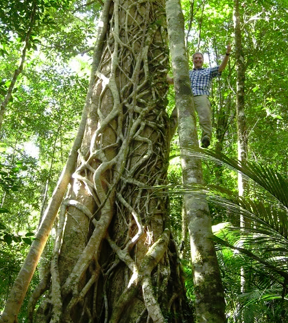 LSU professor Kyle Harms helped test the long-standing hypothesis that ecological sorting processes that occur in the earliest life stages are especially influential in structuring composition and diversity in tropical forests. (Credit: Kyle Harms)