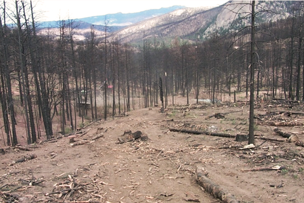 Post-fire site 35 miles northwest of Colorado Springs. Salvage logging has left compacted trails and cleared out some of the ground cover. (Credit: Joe Wagenbrenner)
